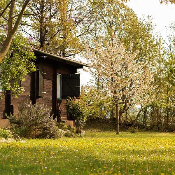 Camping San Michele, Crescita e Vita.